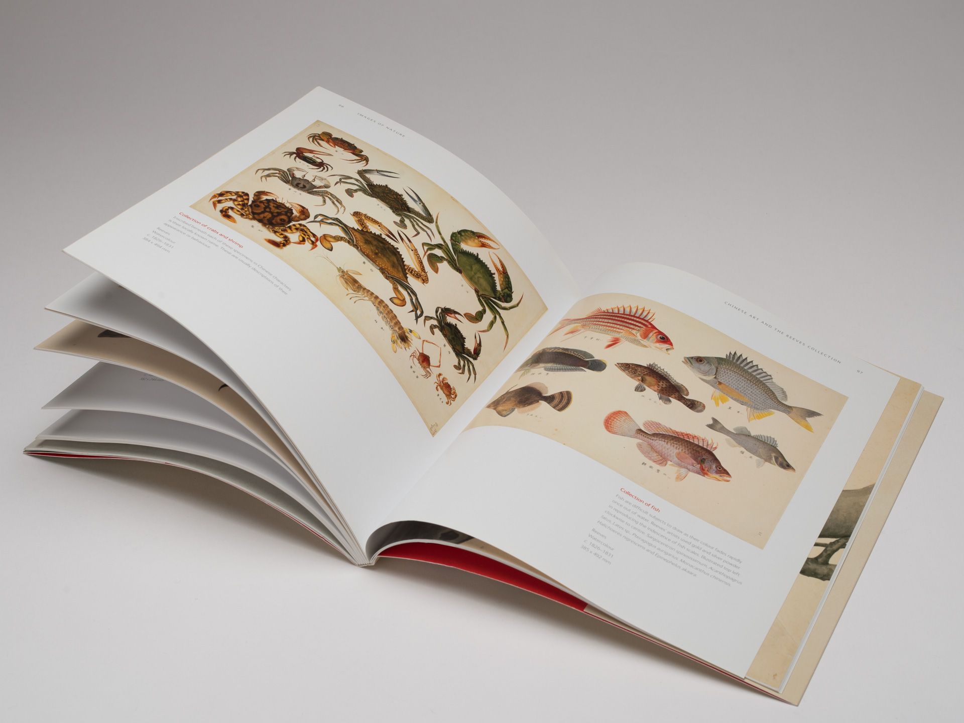 Natural History Museum <br>Books for Adults