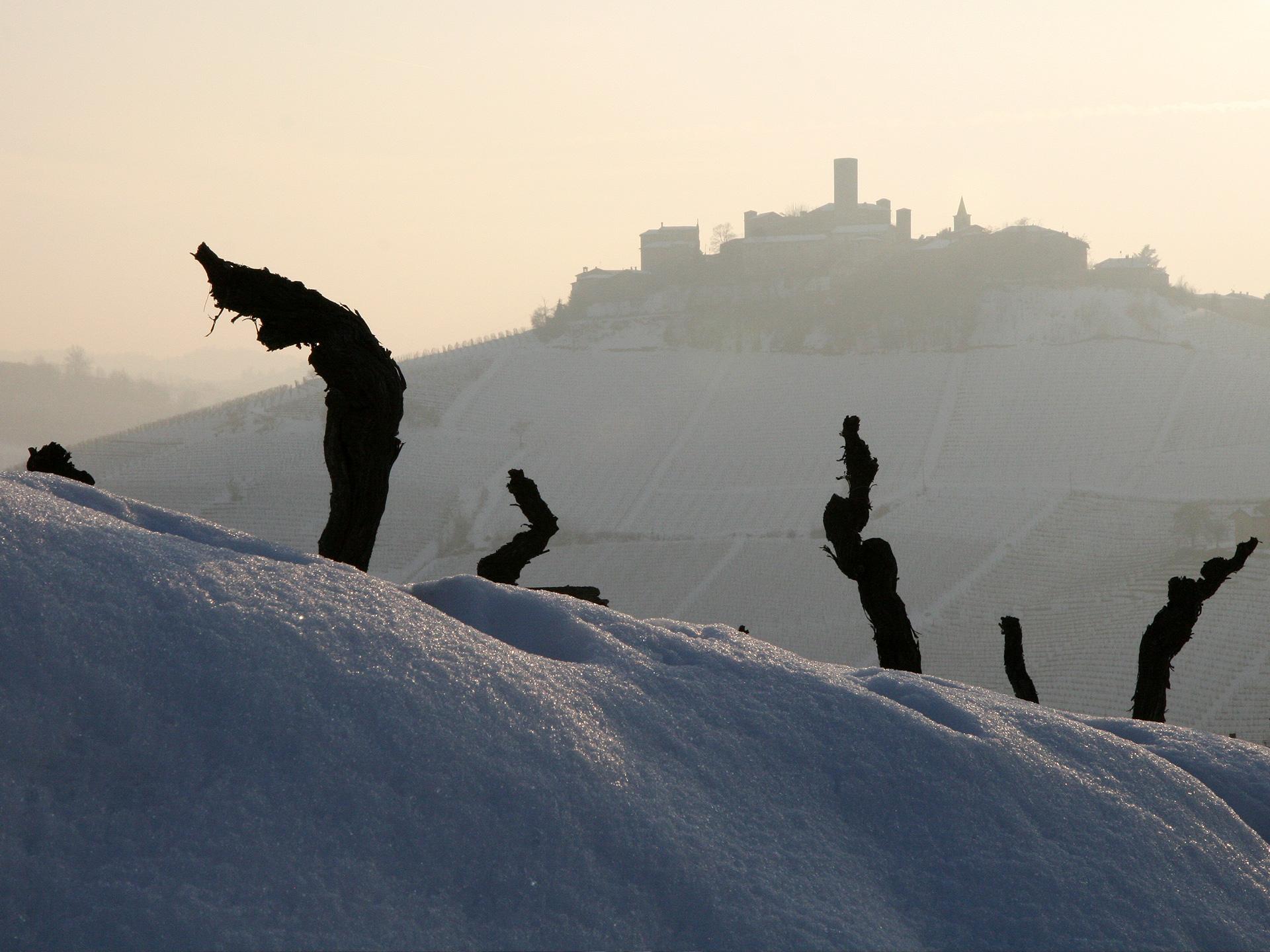 wine photography piemonte region